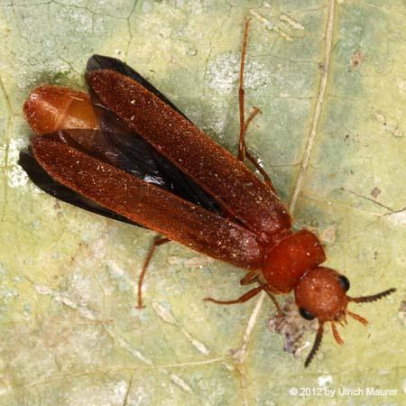 insekten k fer und ungeziefer im haus oder im garten angesiedelt ha pictures to pin on pinterest. Black Bedroom Furniture Sets. Home Design Ideas
